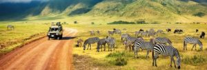Organiser un safari sur mesure