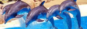 Rencontrer des dauphins à Antibes